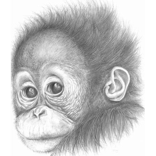 Beautiful drawing of baby orang-utan by Jane Kay Desen camera