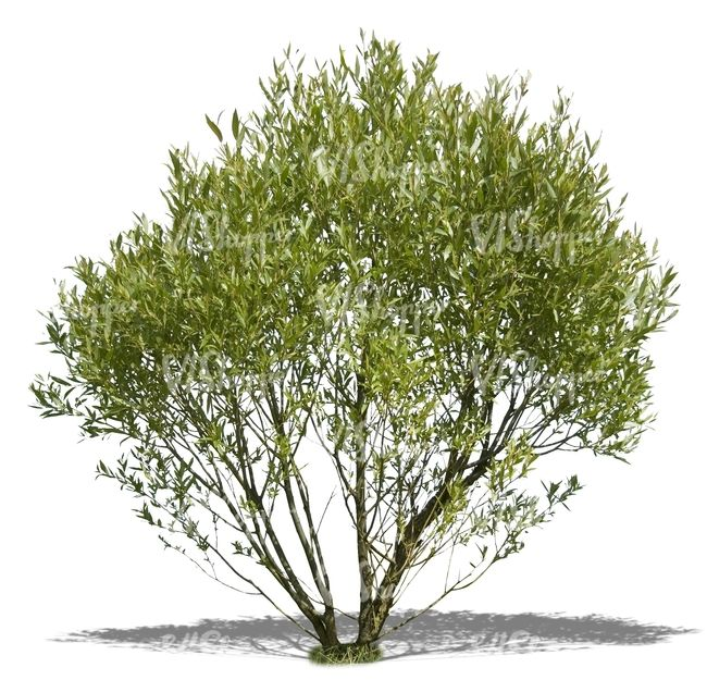 two cut out ordinary small bushes - cut out trees and