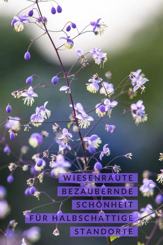 Photo of Blumenportrait: Die Wiesenraute