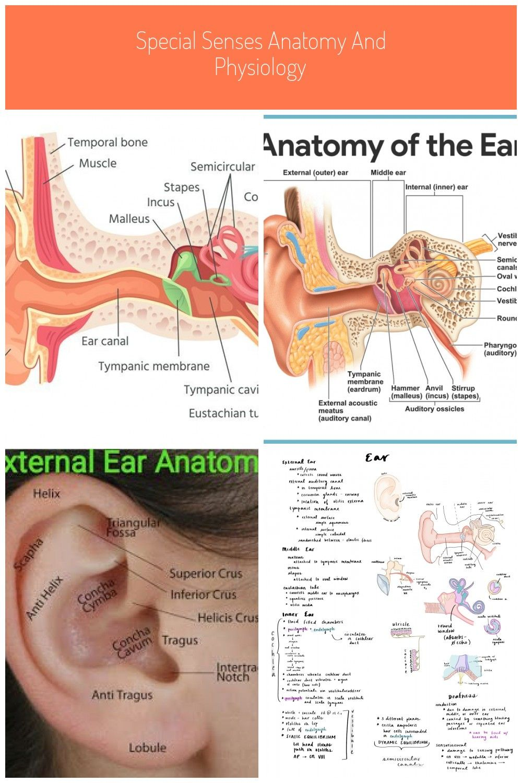 #ear anatomy   Anatomy and physiology, Physiology, Anatomy