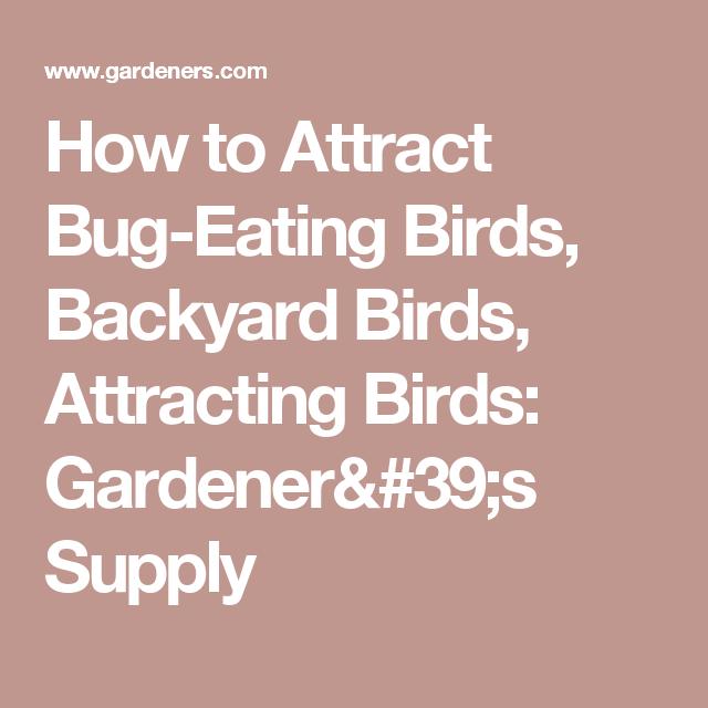 How to Attract Bug-Eating Birds, Backyard Birds, Attracting Birds: Gardener's Supply