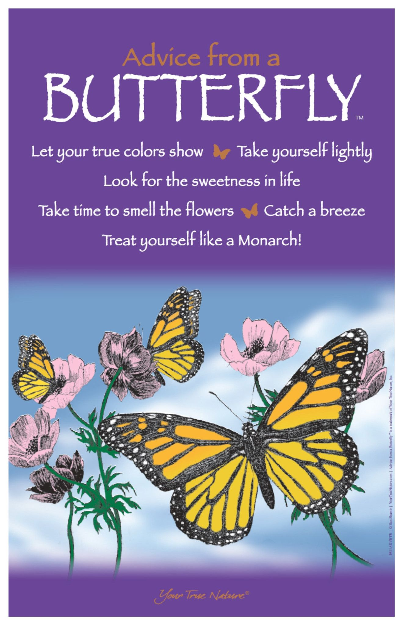 Advice From An Eagle Frameable Art Postcard Your True Nature Inc Butterfly Quotes Butterfly Inspiration Flower Quotes