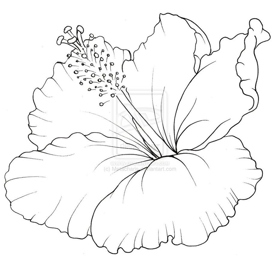 Flower Drawings For Tattoos Hibiscus Flower Tattoo By Metacharis