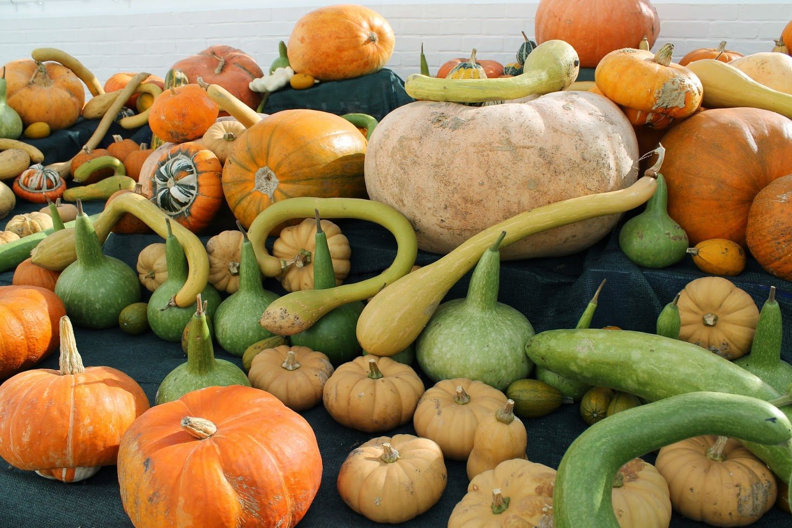 Walled Kitchen Garden Halloween Pumpkins Clumber Park Walled Kitchen Garden