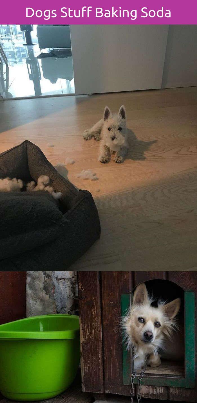 Amiable funny dog waking up dog training agility pinterest