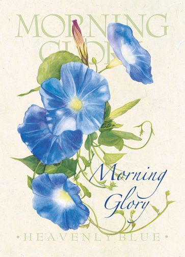 Morning Glory 72dpi