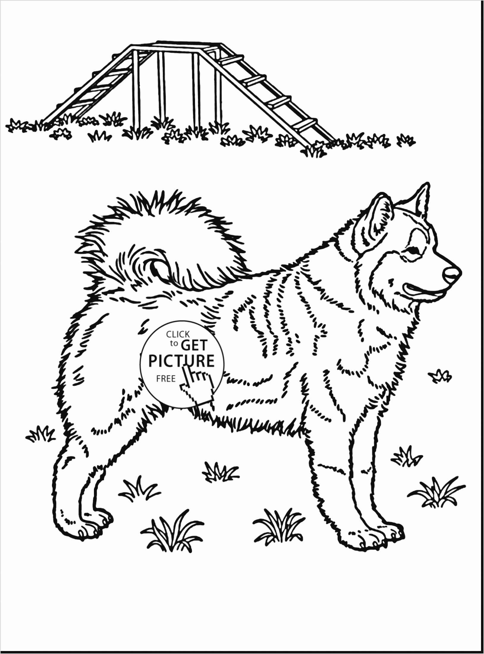 Wild Life Coloring Pages Best Of Free Coloring Pages Animals Kreatif