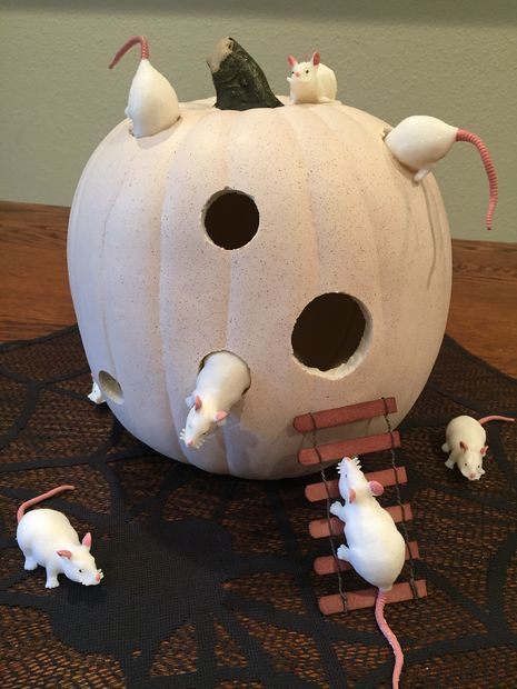 STEAM Lab Pumpkin Patch 2014: Mice and Cheese | Pumpkin ...  |Pumpkin Mouse With Cheese