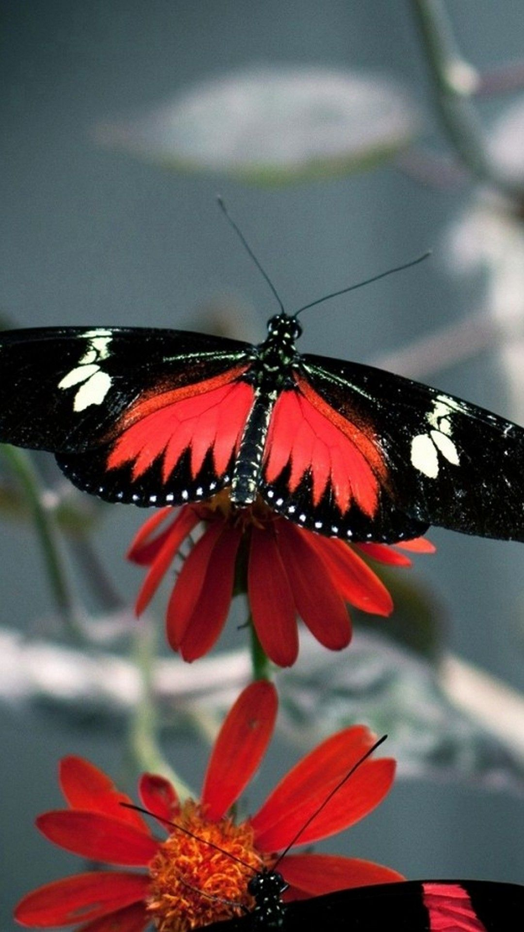 iPhone 7 Wallpaper Butterfly - Best iPhone Wallpaper ...
