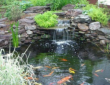 Pond with waterfall | Water Features | Pinterest | Pond, Koi and ...