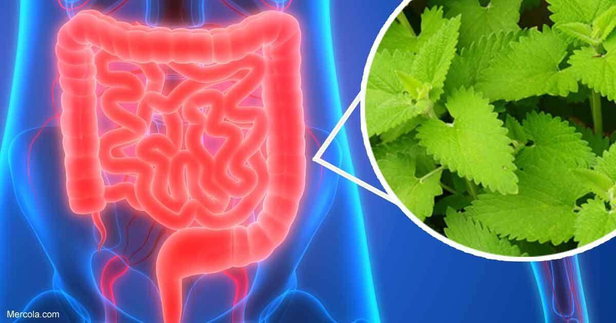 6 de los mejores remedios para calmar el tracto gastrointestinal ...
