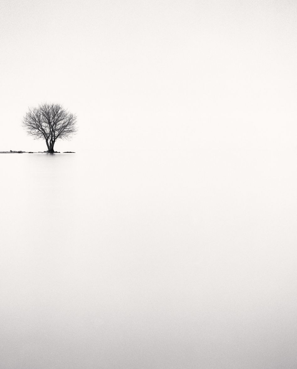 Michael kenna biwa lake tree study 2 omi honshu japan 2002