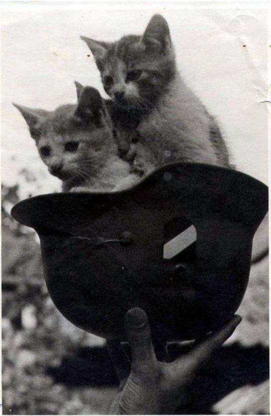 Kittens of War - Imgur