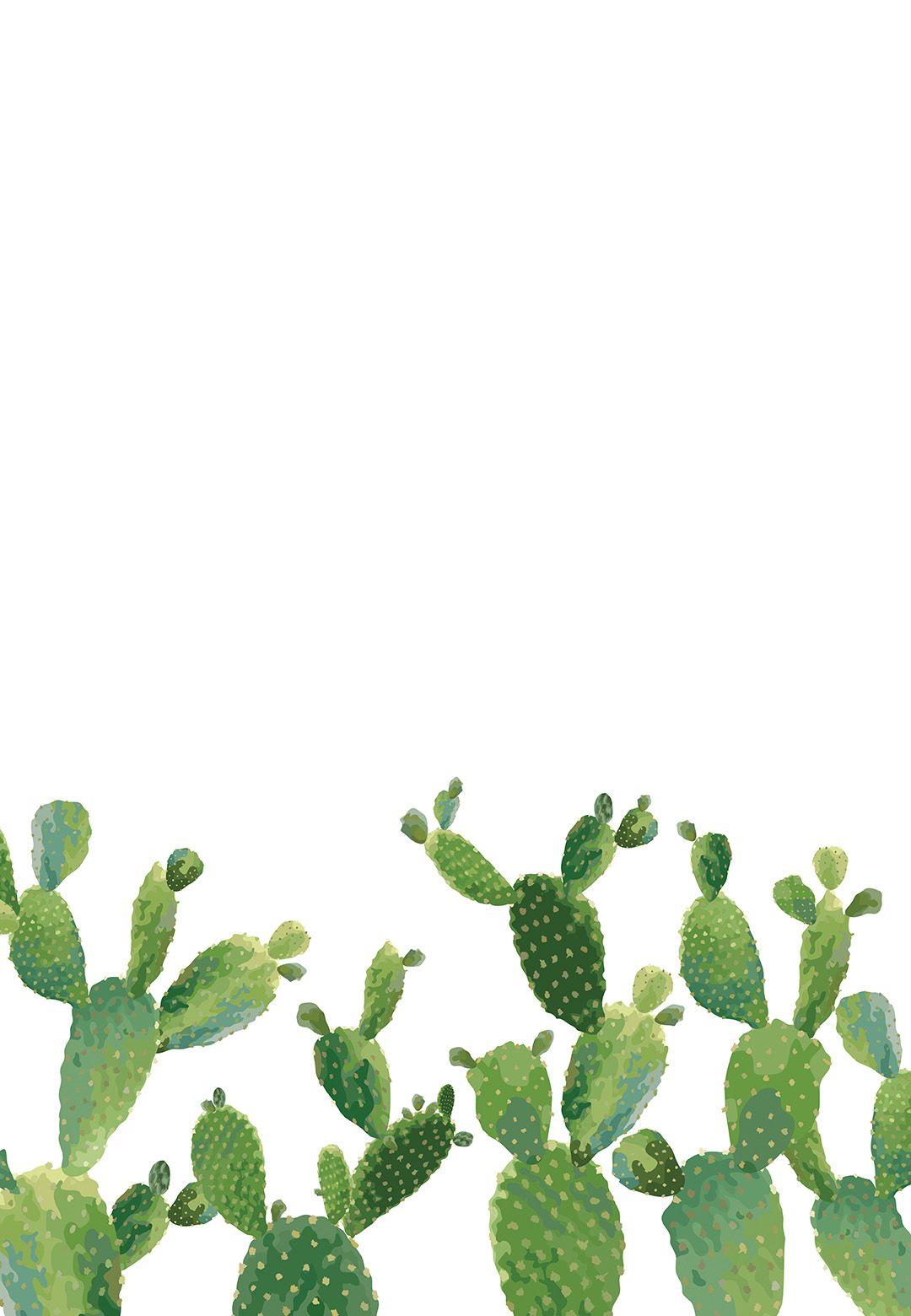 elegant cactus
