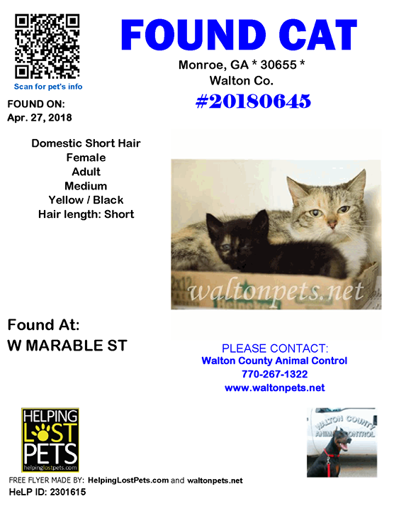 FOUNDCAT Shelter ID 20180645 Monroe (W MARABLE ST)