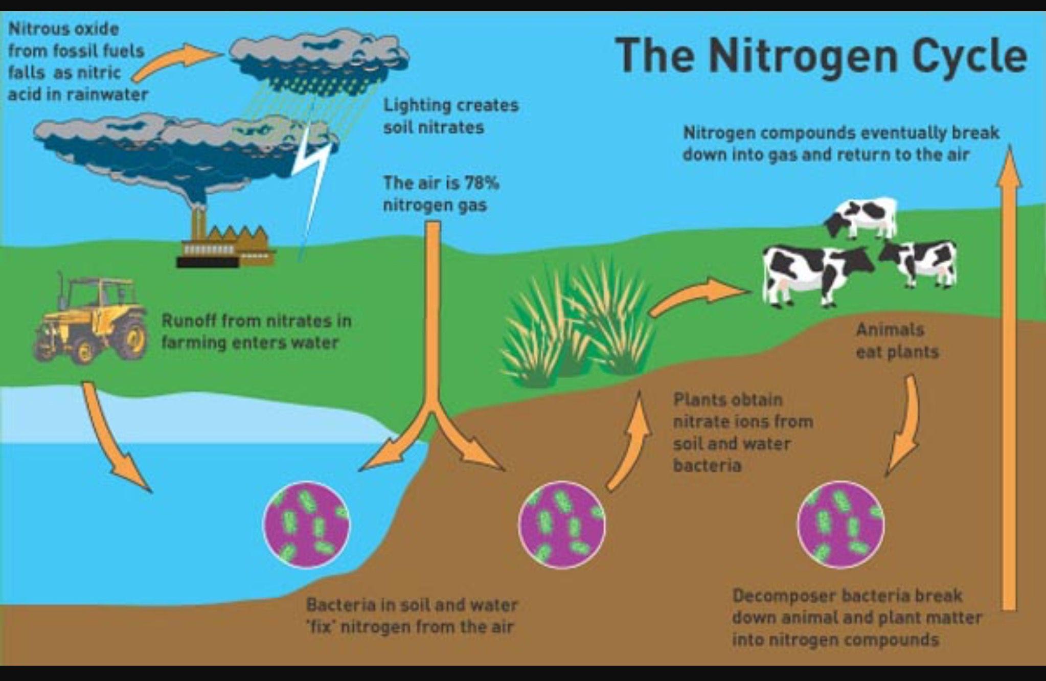 detailed scientific nitrogen cycle diagram - wiring diagrams