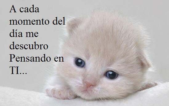 Imagenes De Gatitos Tiernos Con Frases De Amor Minino Love Love