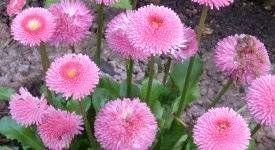 Blumen Gegen Schnecken