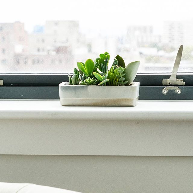 Window Sill Perfection! @madpotters Rectangle Planter brings a polished look with the perfect pop of color and just the right amount of shine with the matte gold accents. Makes a great gift for the succulent lover in your life, too! Check us out on ETSY today to ensure on time holiday delivery! . 📷 @alcidezx3 . . .  #succulents #photoshoot #succulentobsession #ilovesucculents #succies #succielove #succulentplanter #succulentpot #succulenthome #windowsillgoals #greenthumb #gardening…