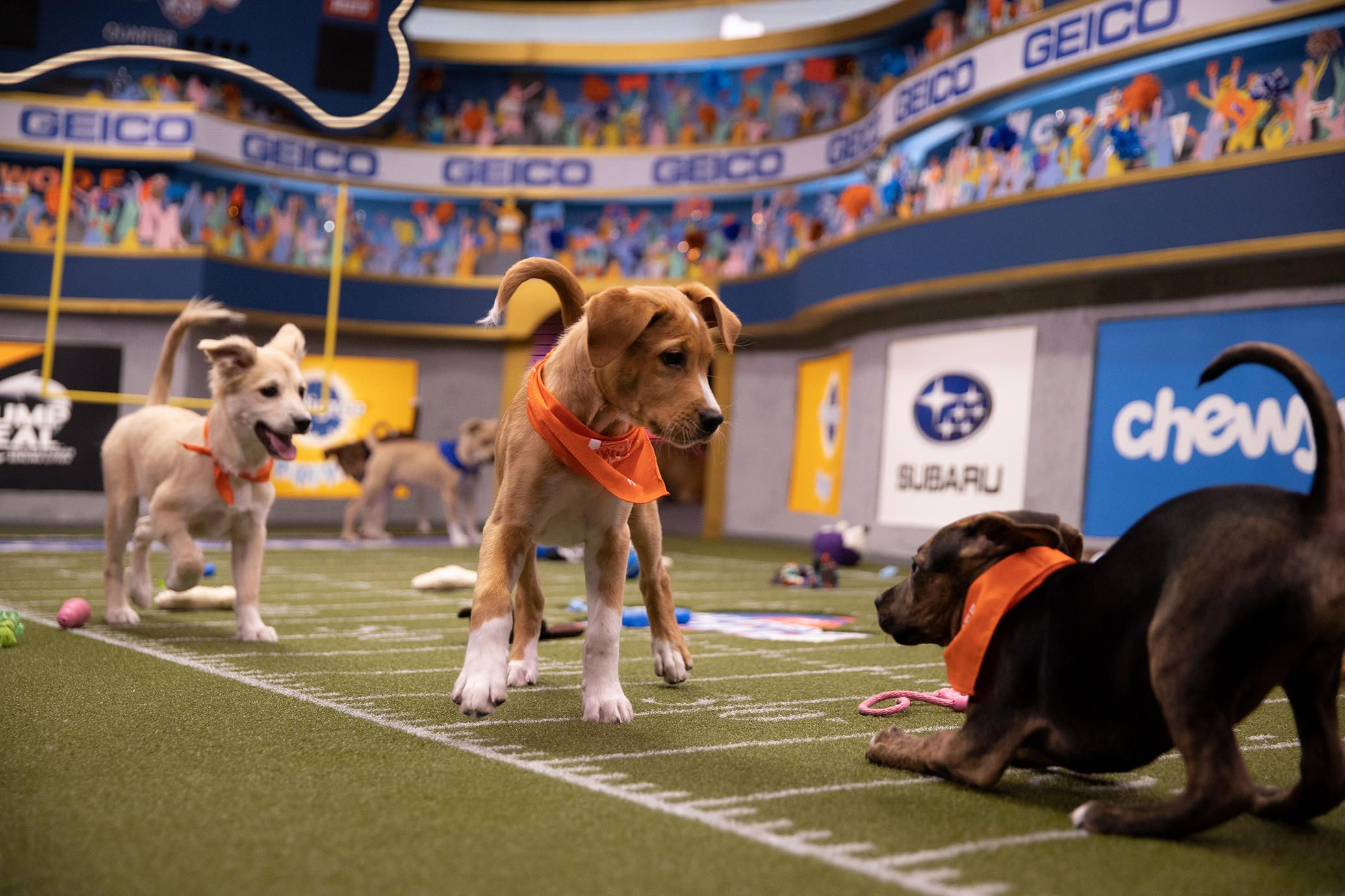 How To Watch The 2020 Puppy Bowl In 2020 Puppy Bowls Puppies Animal Planet