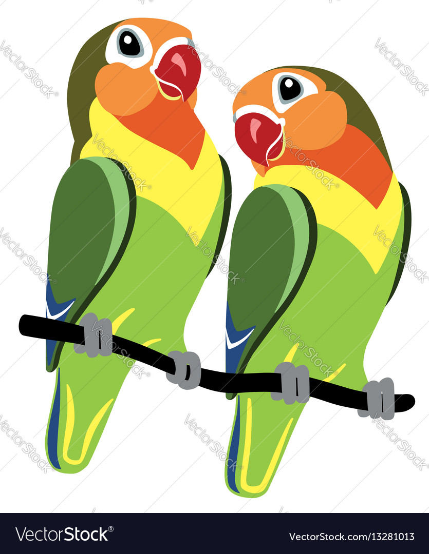 Pair Of Cartoon Parrots Fischer Lovebirds Agapornis Isolated On White Download A Free Preview Or High Quality Adobe Illustrat Cartoon Love Birds Vector Images