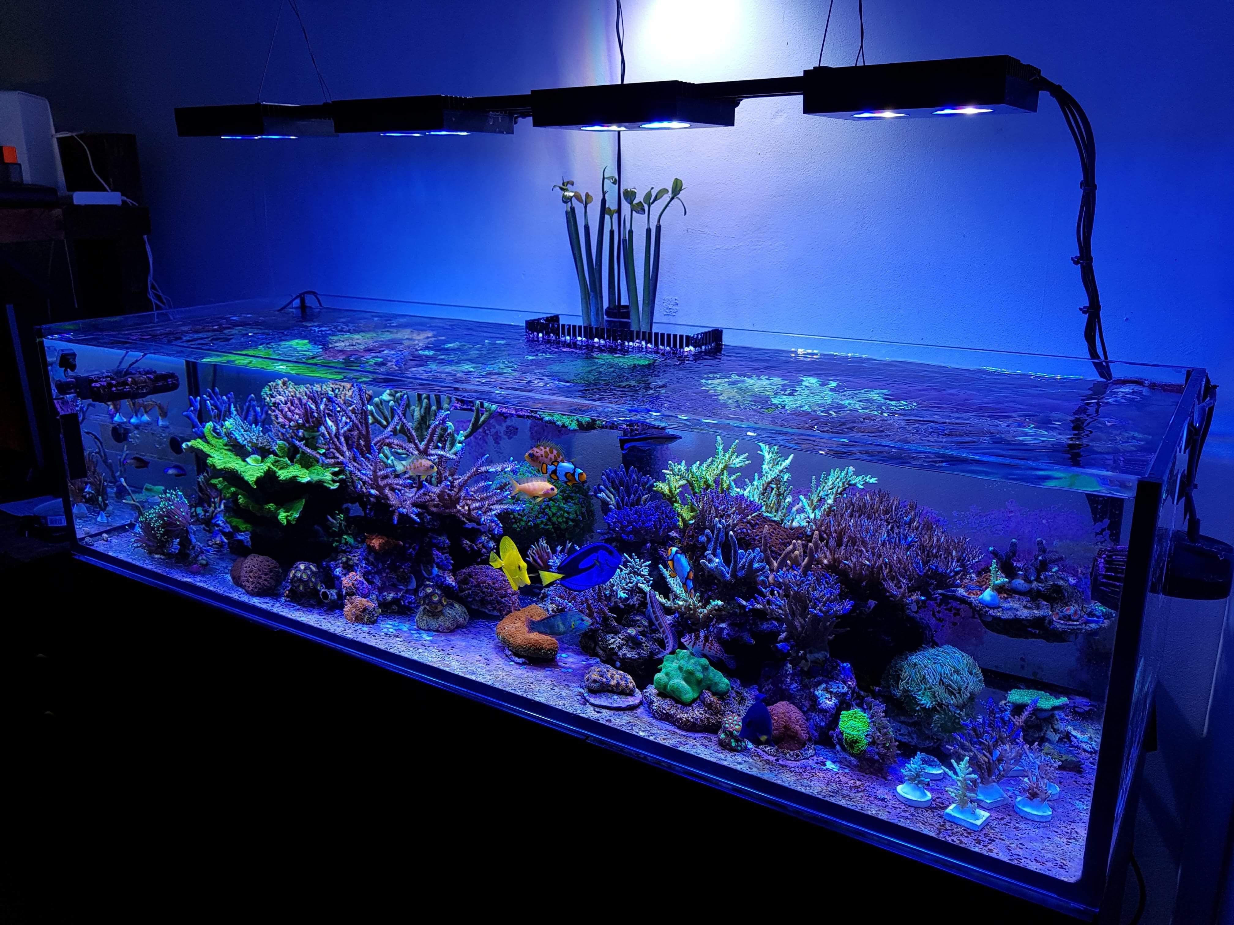 0417a79ba9d1944a17c0f657f67ec0b9 Frais De Aquarium Recifal Complet Concept