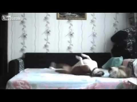 Dog Is Not Allowed On Bed Bahahaha Soo Cute Hahaha