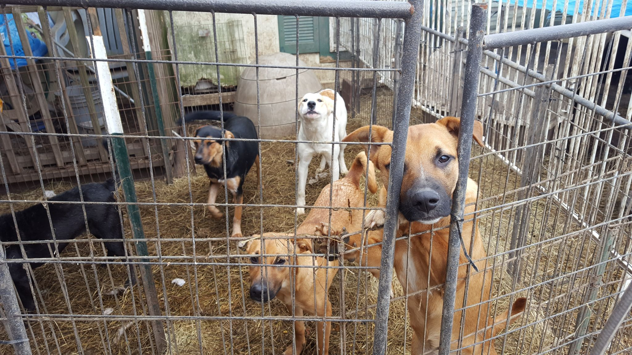 What Happens Next Houston Spca Seizes More Than 150 Animals From