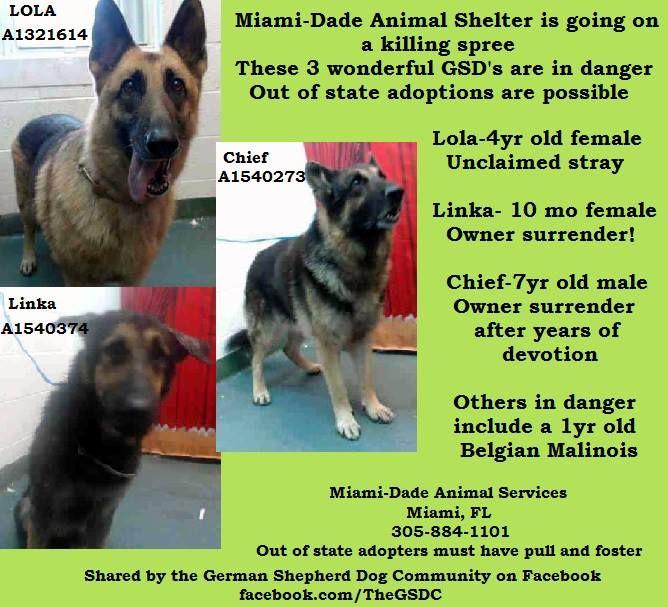 The German Shepherd Dog Community 7 9 13 Urgent Urgent Urgent