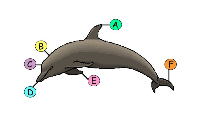 Parts of a dolphin labeled an image featuring the major parts bottlenose dolphin ccuart Choice Image