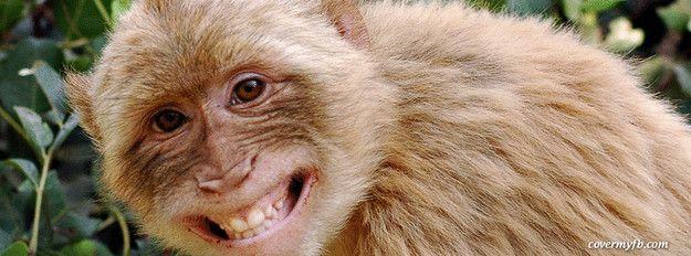 monkey happy - Buscar con Google