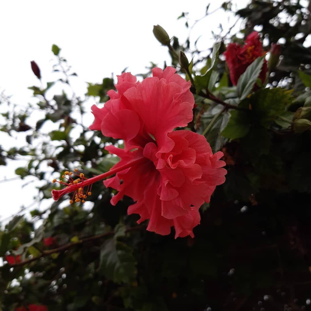 Flower. 02.02.20.  #flowers #flowerpost #pink #nature #nat #beauty #bautifull #vsco #love #loveflowers #archillect #vscocam #flowering #flower_daily #flowerpic #picture #flowerlife #style #flowery #flowerporn #flowerstyle