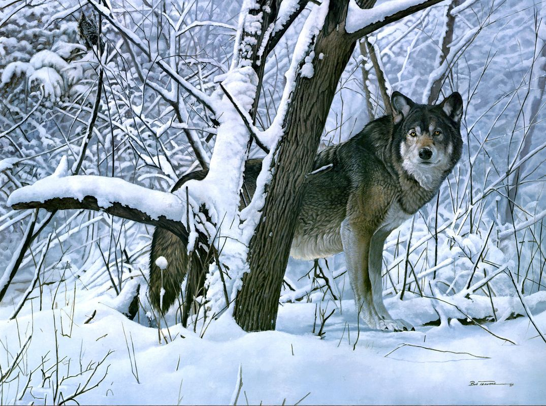 wolf in snow painting by Bob Travers