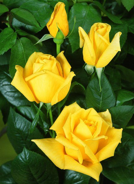 Flower Yellow Flowers A Symbol Of Friendship Latin Word Roots But At The Time
