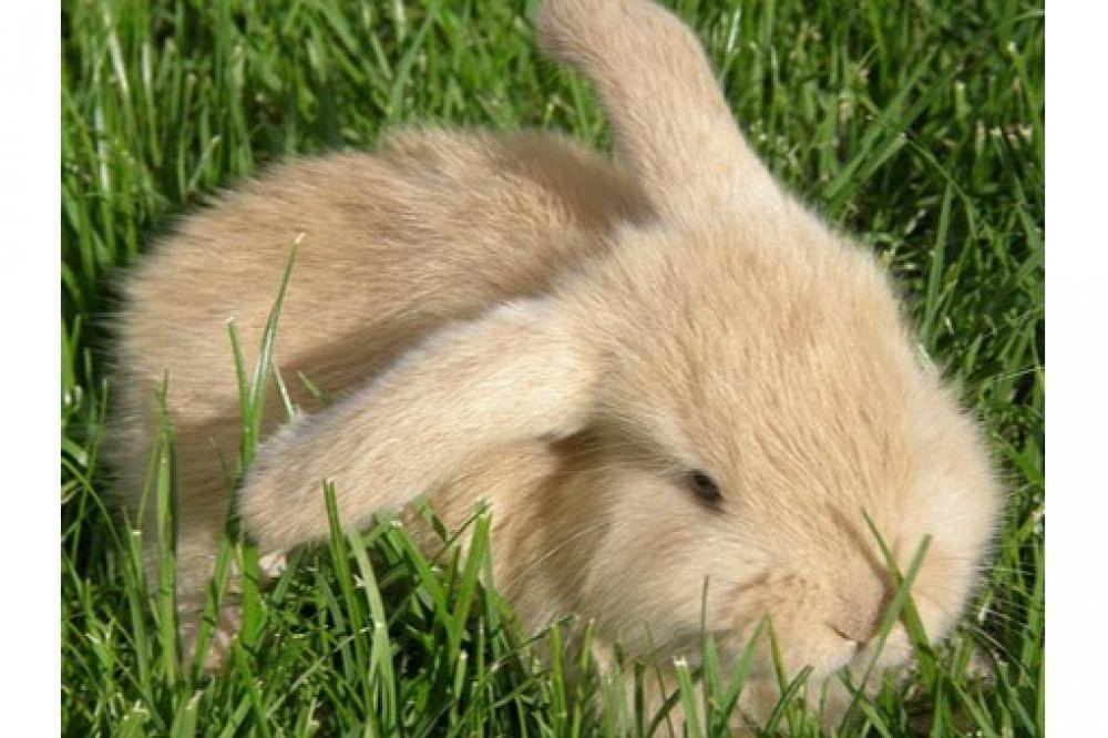 Fantastic, isn't it?  Love Rabbits? Visit us by clicking active link on our bio/profile.  #bunnysept #bunnygirls #bunnysecretstash #bunnyhouse #bunnyfresh #bunnymodel #bunnymum #bunnyhead #bunnylines #bunnyranch #bunnyfamily #bunnypinterest #bunnyinhollywood #bunnyspace #bunnyland