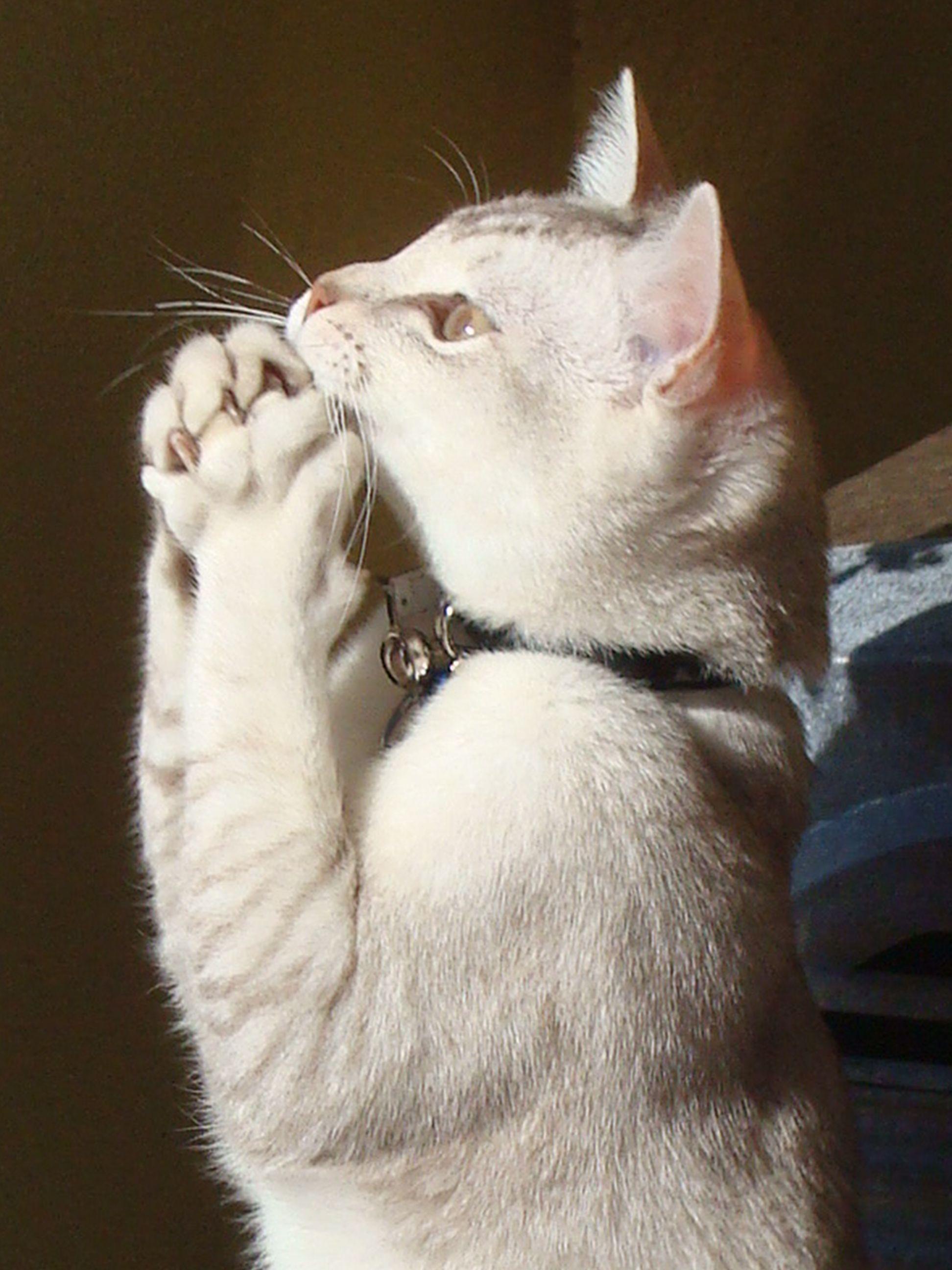 Praying cat Funny animals
