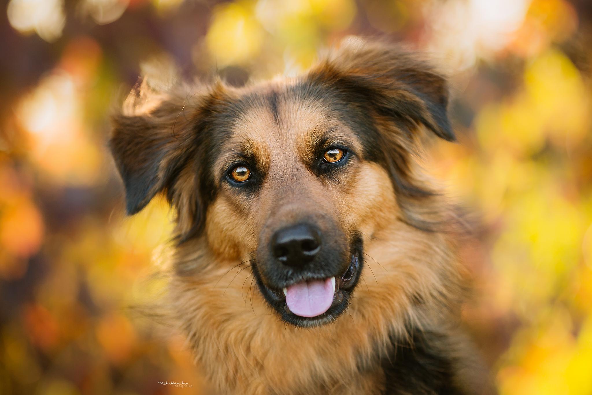 Hundefotografie Hundefotos Hunde Hundefotografie