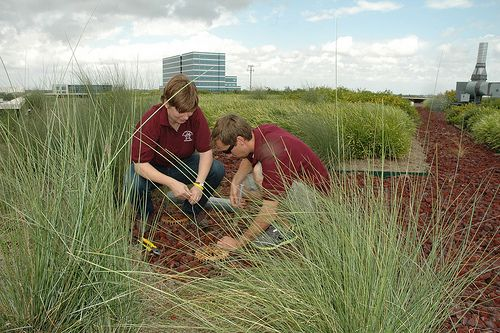 How a Green Roof Can Improve Your  // #greenbuildings #green #greenliving