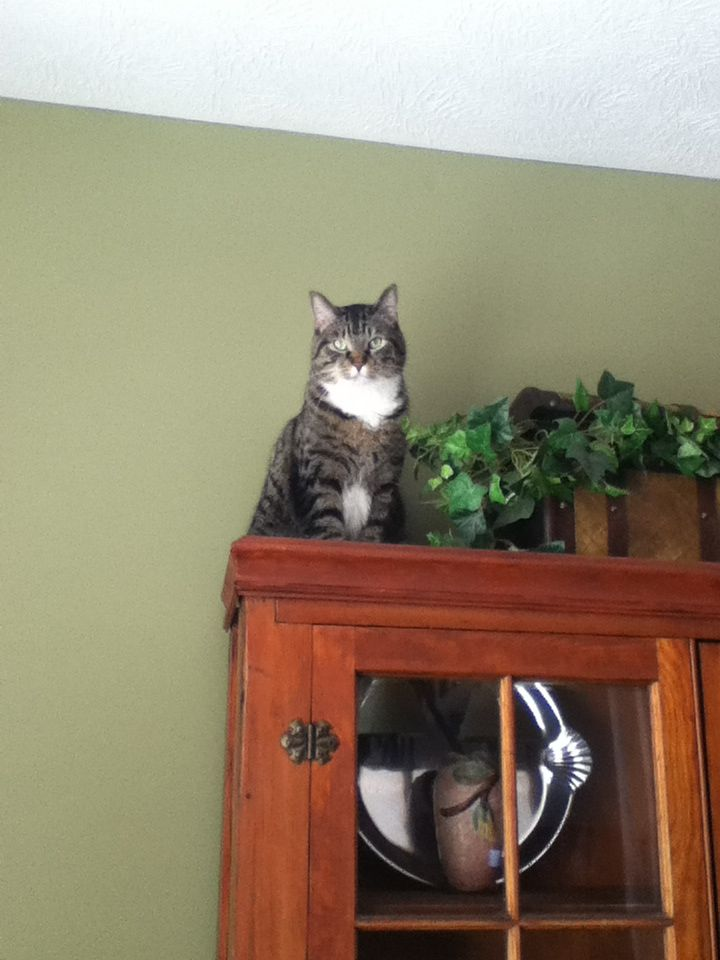 I love my kitty. He thinks he is the king of the house...he is!