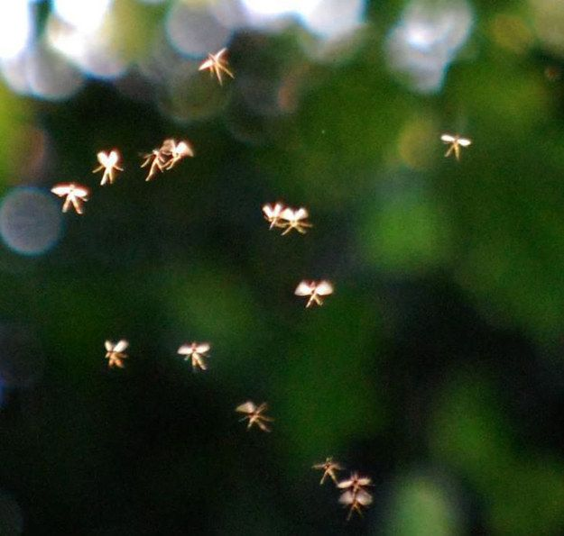 British Man Claims To Have Photographed Actual Fairies Fairies