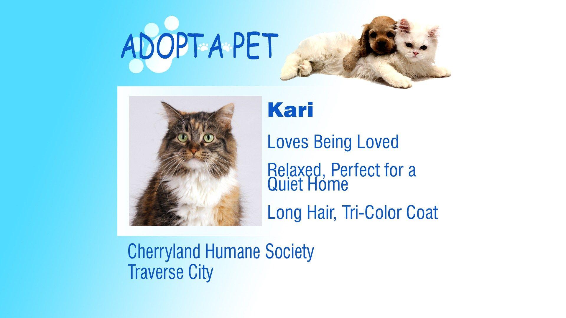 Adopt A Pet Tuesday Phoenix Kari Lilly Pets Adoption