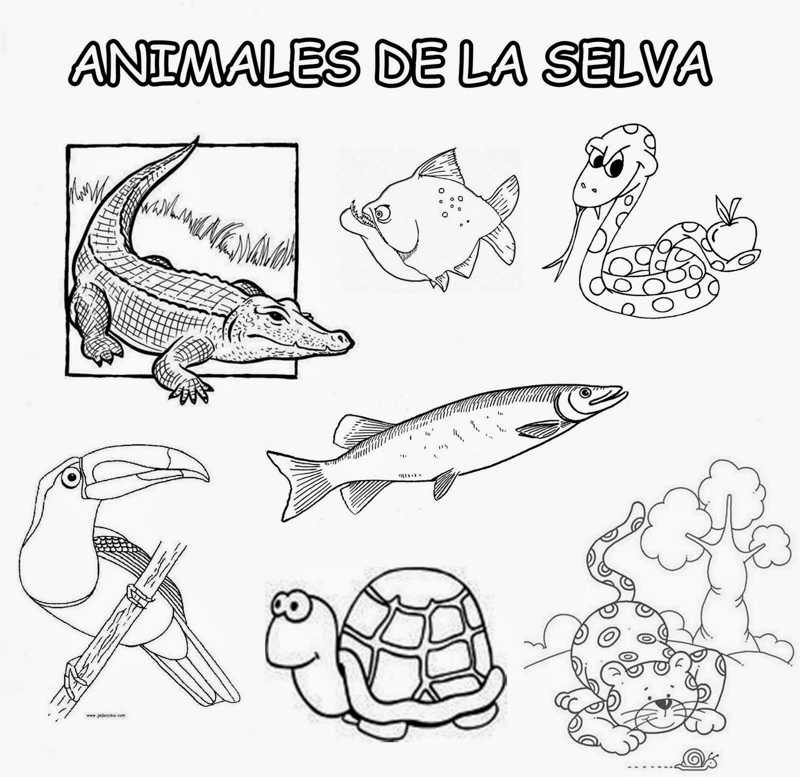 Animales De La Selva Jpg 1600 1554 Animals Comics Peru