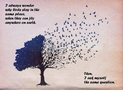 Favorite Quotes Sayings Birds Place Collection Of Inspiring Quotes Sayings Images Wordsonimages Art Bird Tree Ink
