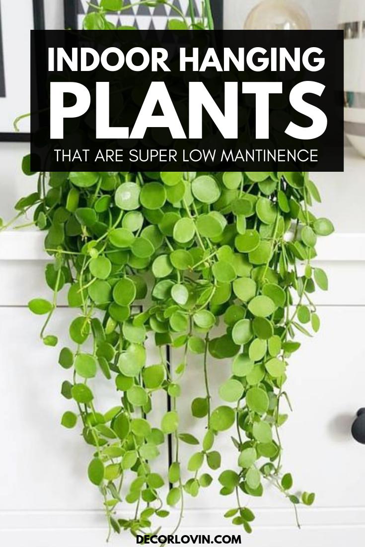 Best Indoor Hanging Plants For Your Home