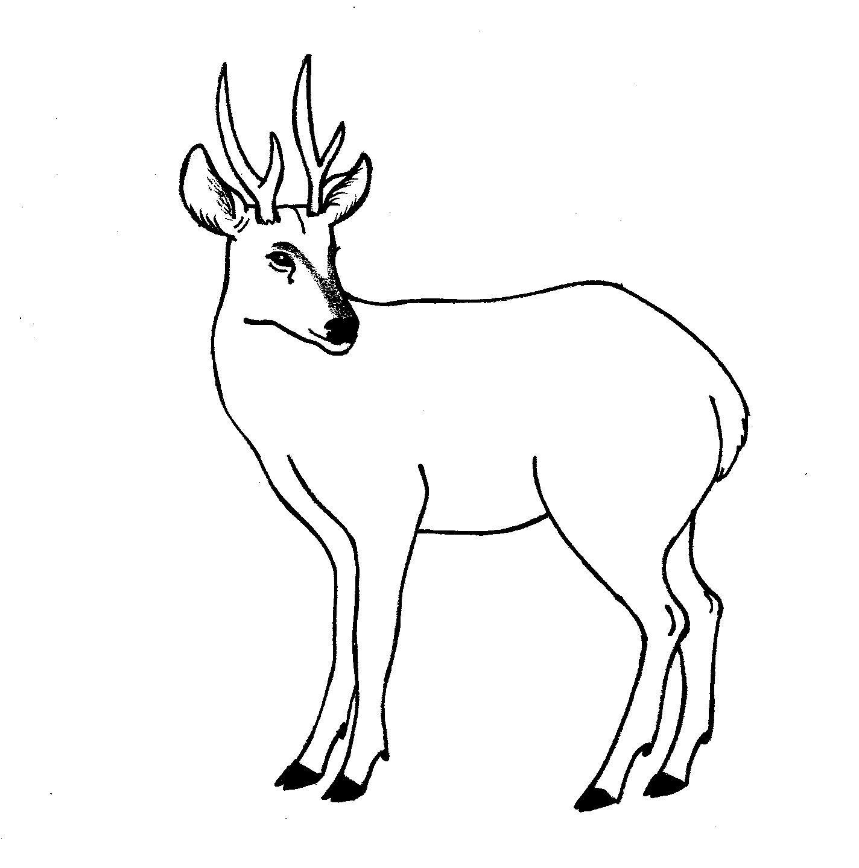 Resultado De Imagen Para Huemul Para Colorear Imagenes Coloridas Dibujos Animales
