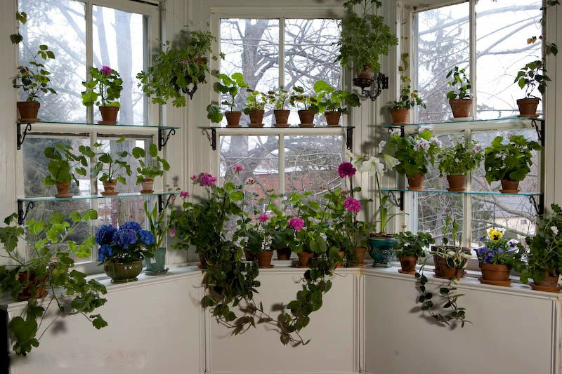 If I Had A Bay Window In My Kitchen, This Garden Would Definitely Happen!