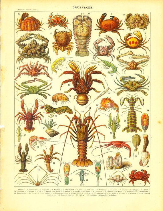 1910s Crustaceans Print, Crabs, Lobster, Shrimp, Sea Life, Ocean ...