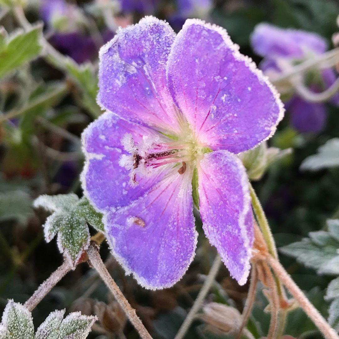 Es Ist Hier Richtig Kalt Geworden Habt Ihr Den Garten Schon Fertig Fur Den Winter Coldoutside Gartenliebe Garten Flora Fruhling Garden Flo Plants