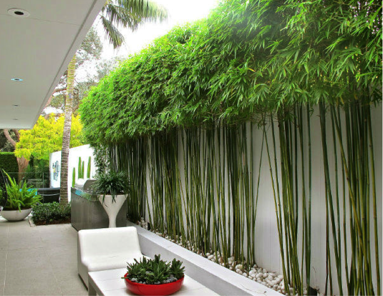 bamboo plants - google