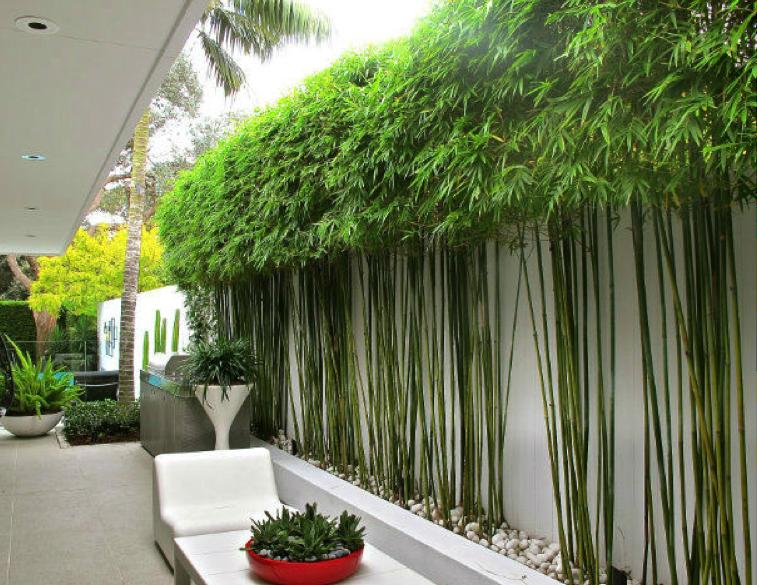 Modern clean bamboo landscape design google search for Bamboo garden designs